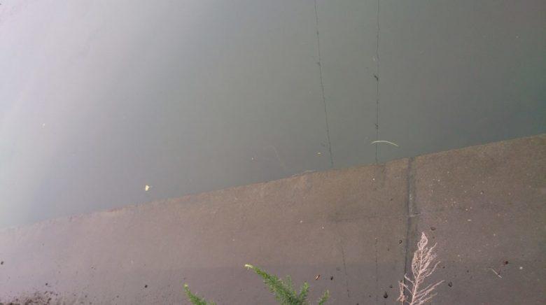 ヒラメ 濁り潮