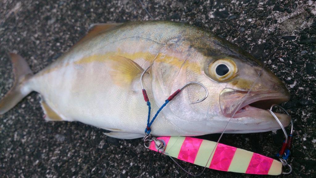 港湾ヒラメ・マゴチ・青物釣り メタルジグで潮の変化をとらえよう!