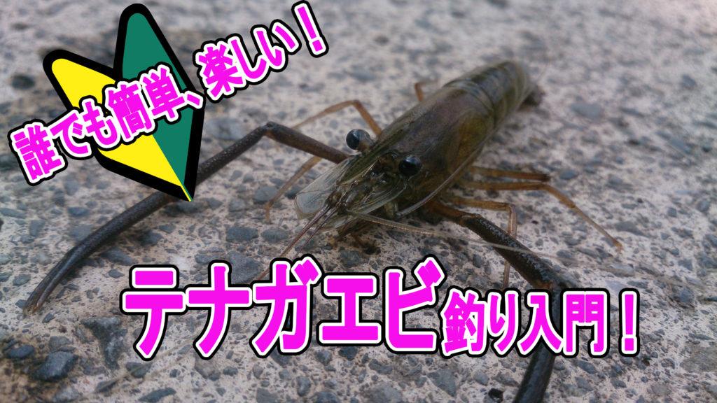 テナガエビ釣り 道具選び~釣り方を基礎から徹底解説!