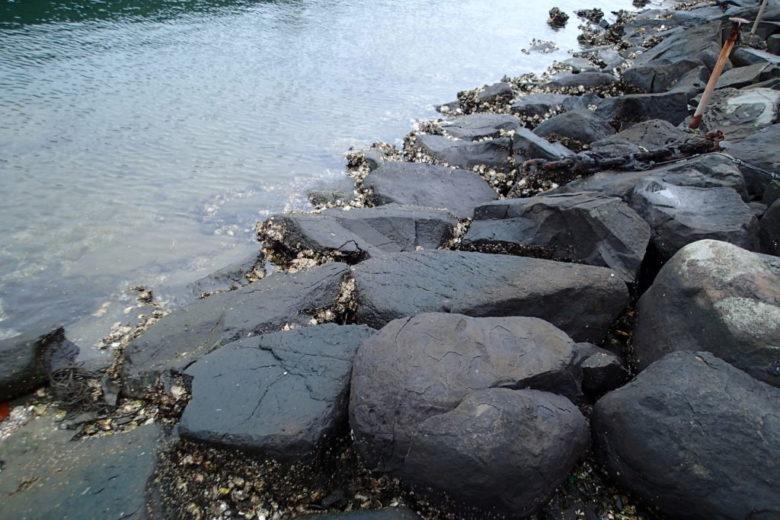 カサゴ ゴロタ 石
