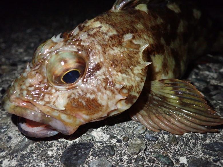 スピン 釣れる魚