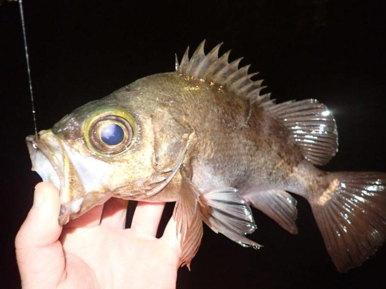 ライトワインド 時期 釣れる魚 地域性