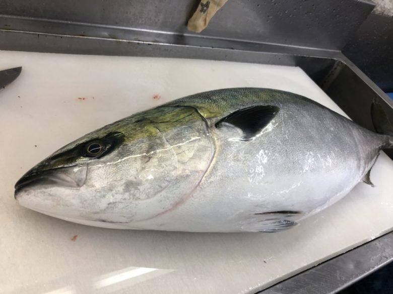 冬 ショアジギング 釣れる魚 ターゲット