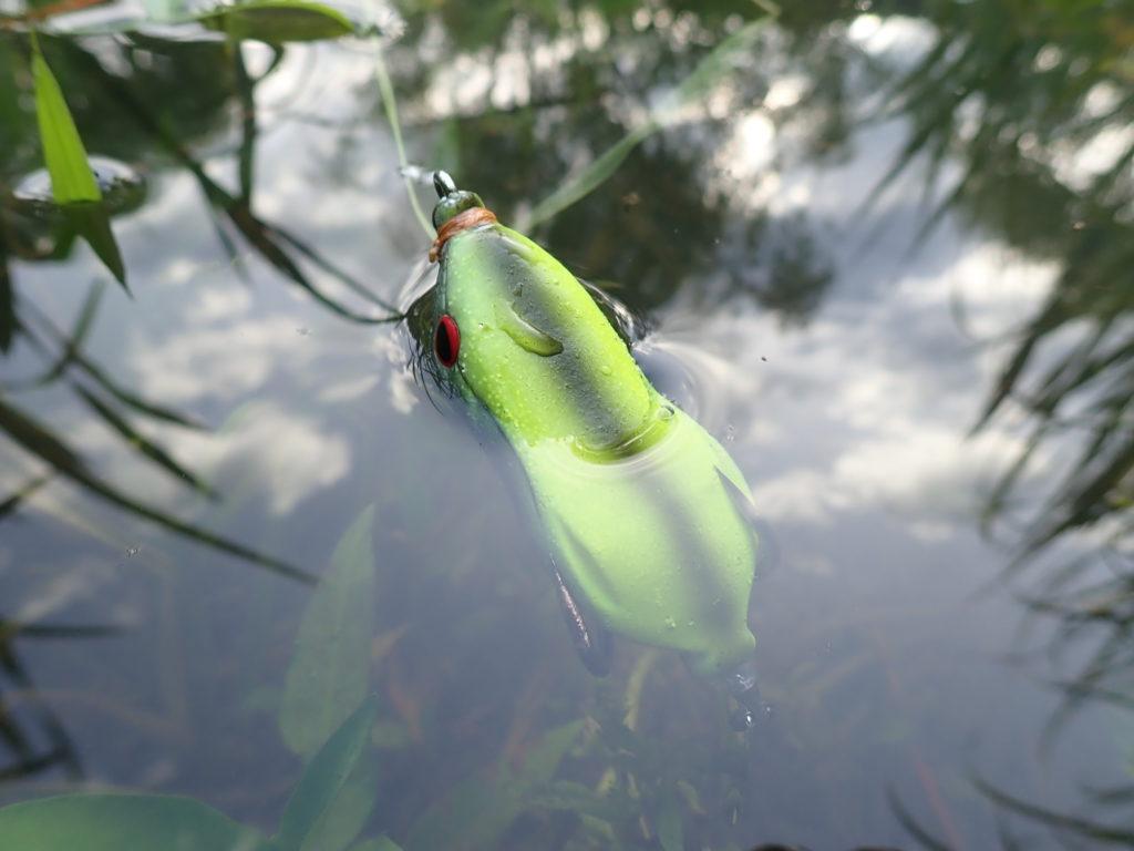 静岡ライギョ釣行 低活性で苦戦の展開