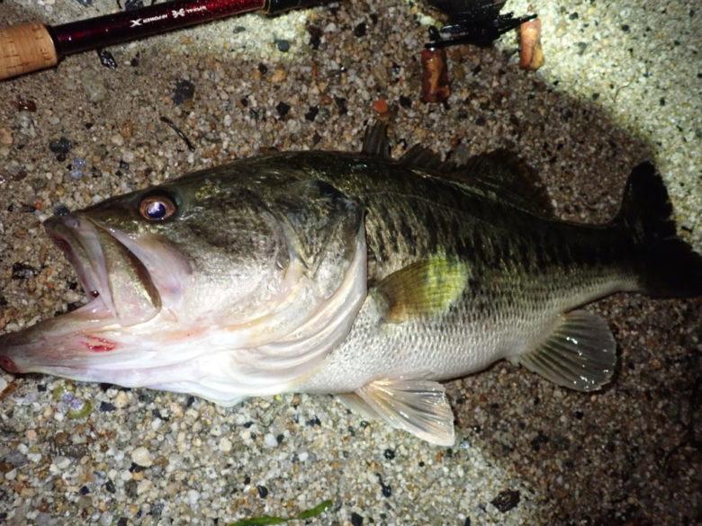 川釣り 夜釣り 釣果