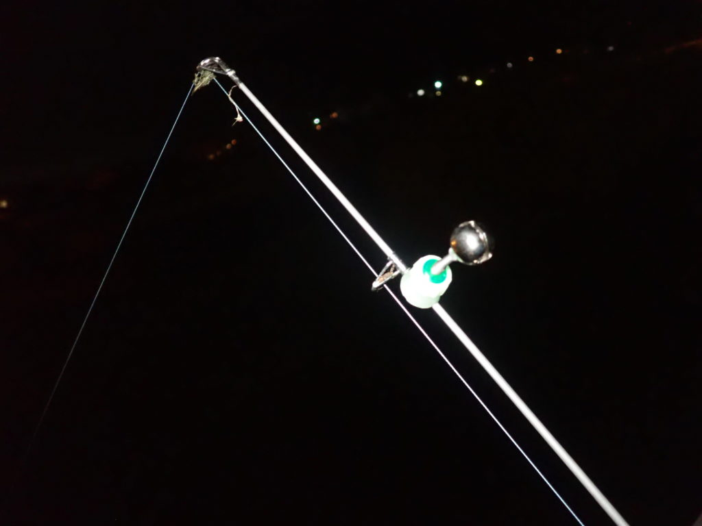 焼津うなぎ釣行 魚影は濃いが、小型が多く苦戦