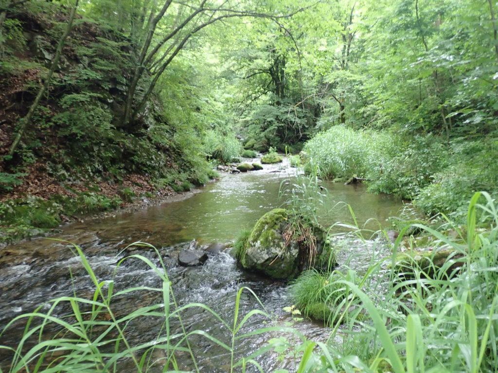 ファインテール 渓流
