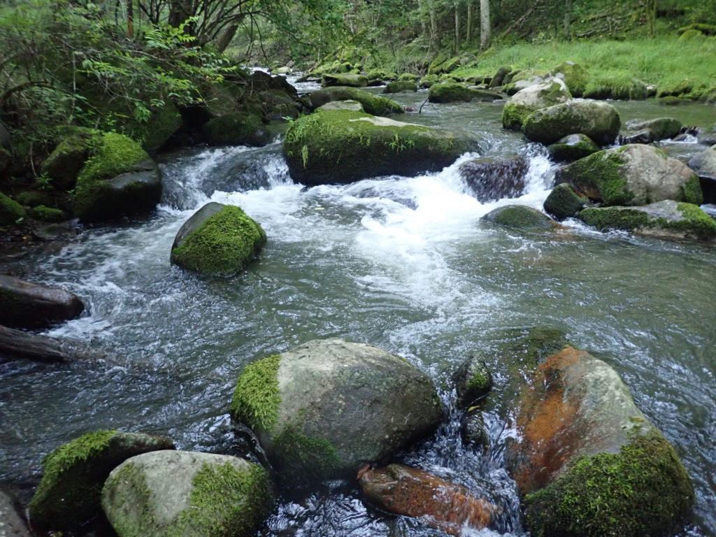 渓流 落ち込み