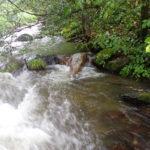 渓流 ボサ川