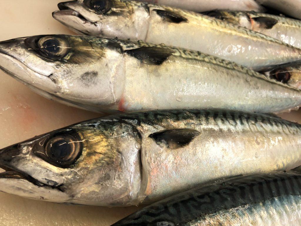 【サンマ・サバetc】釣り餌用切り身の作り方の基本!