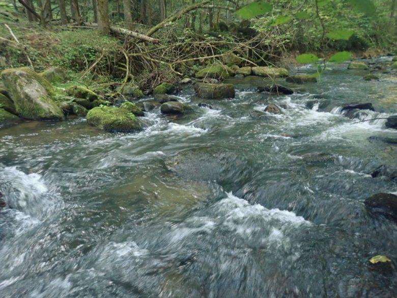渓流 ミノー 大きさ 流れ