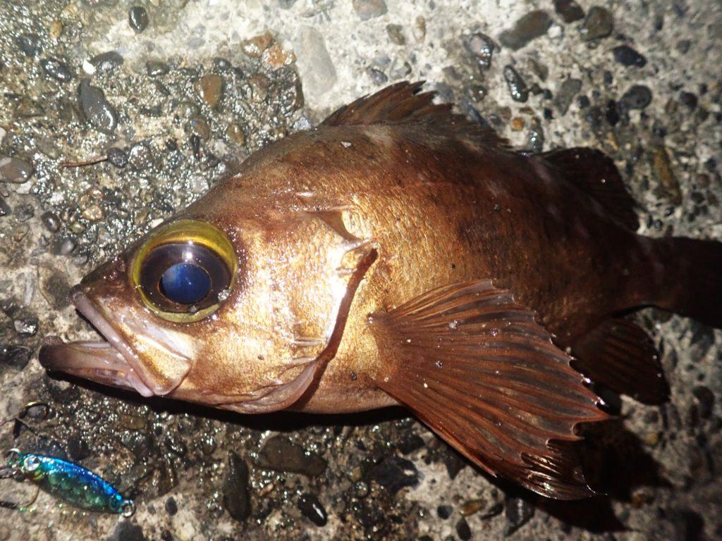 冬に釣れる魚・おすすめターゲットを徹底解説!