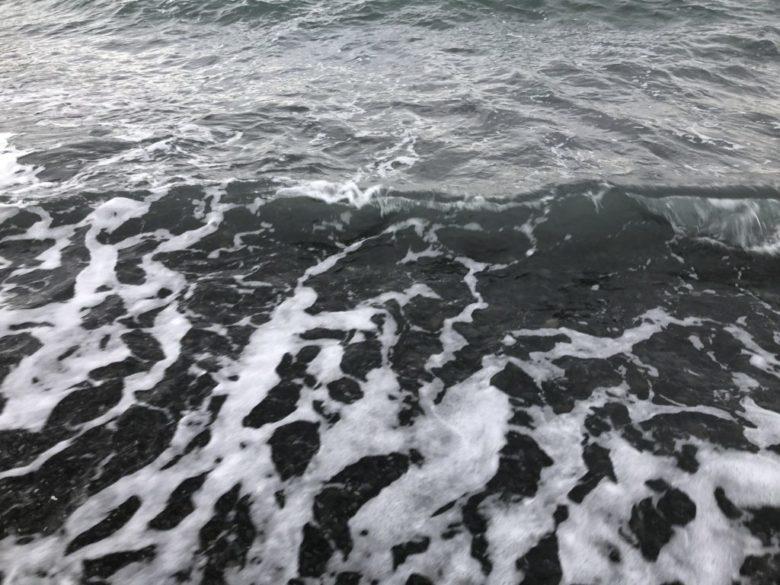 サーフエギング ベイトフィッシュ