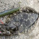 デスアダーで釣れたヒラメ