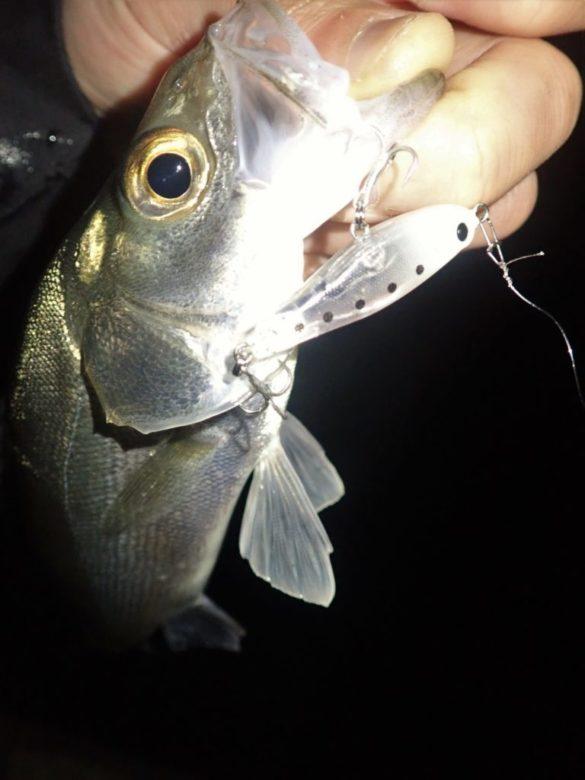 フロッパー38 釣果