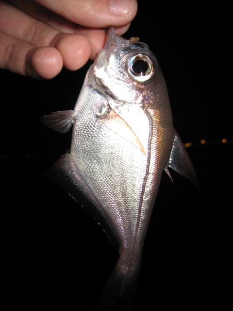 ライトゲーム 釣れる魚