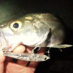 SPM55 釣れる魚