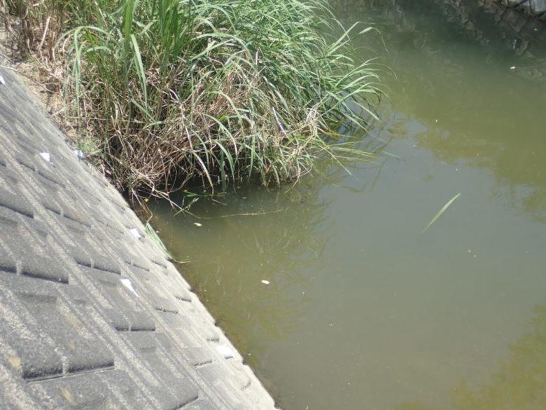 流れ込み 水路