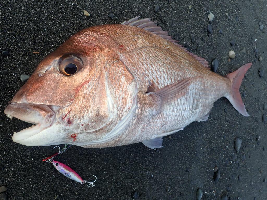 ショアスロー 釣れる魚