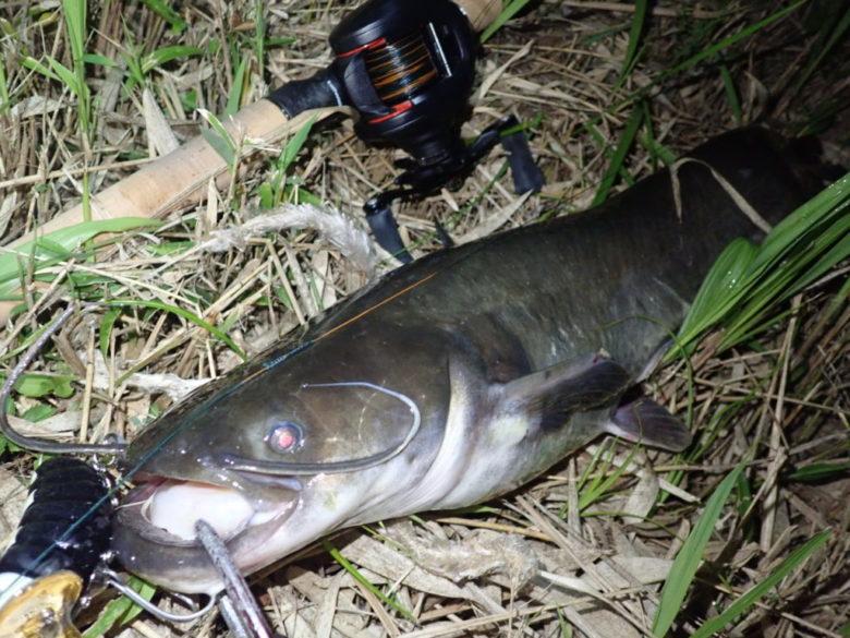 夜釣り amazon ヘッドライト