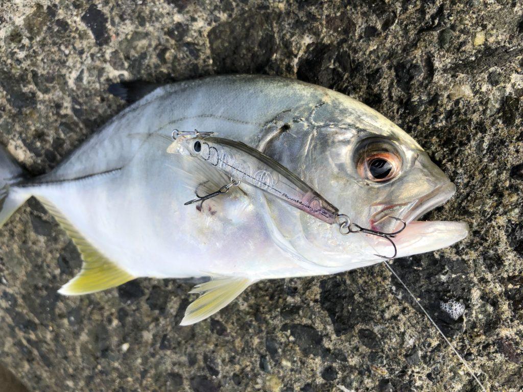 メッキ釣り 時期 シーズン