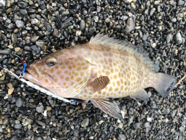 秋 底物 根魚