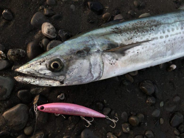 静岡サーフ ヒラメ サワラ