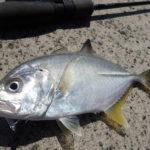 メッキ釣り ライン 選び方 PEライン ナイロンライン フロロカーボン リーダー