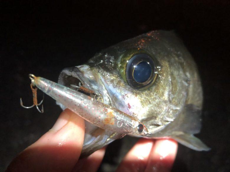 メバル プラグ 釣果