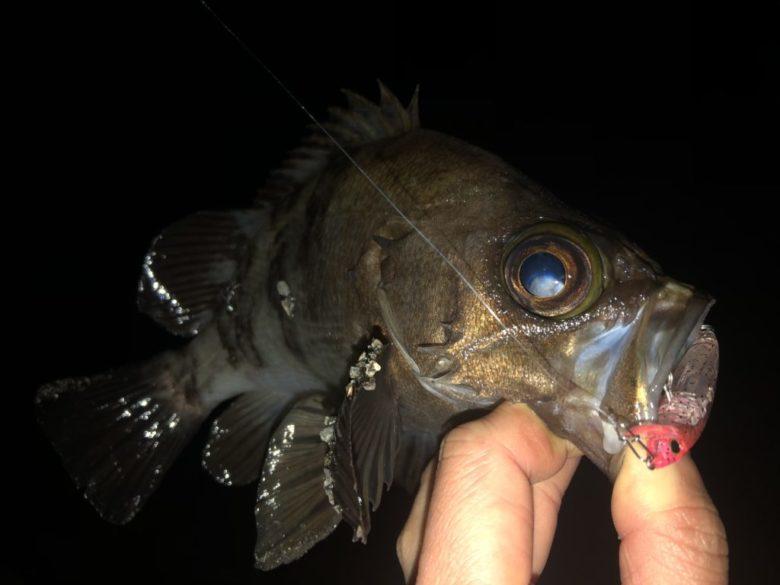 ハードコア LGミノーF メバル 釣果