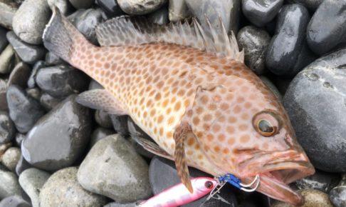 底物 根魚 ギャロップアシスト ロングキャスト
