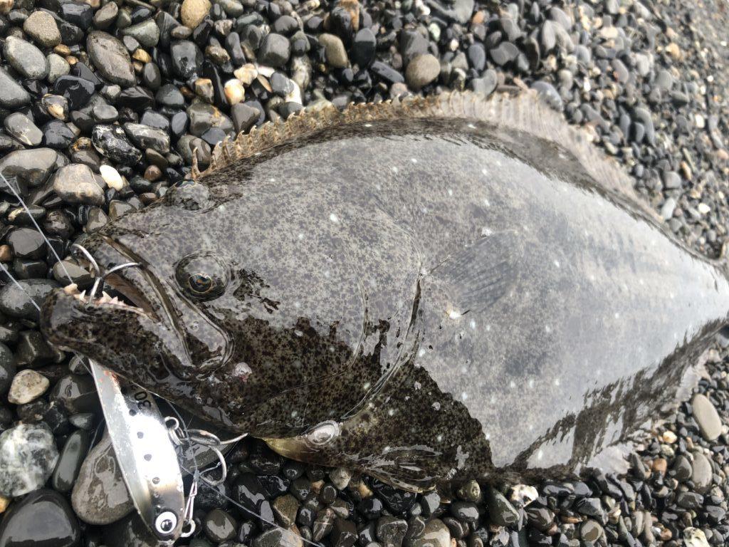 ショアジギング 春 釣れる魚
