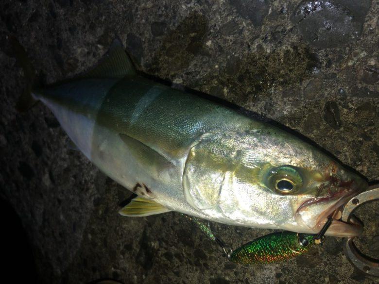 イナダ 夜釣り
