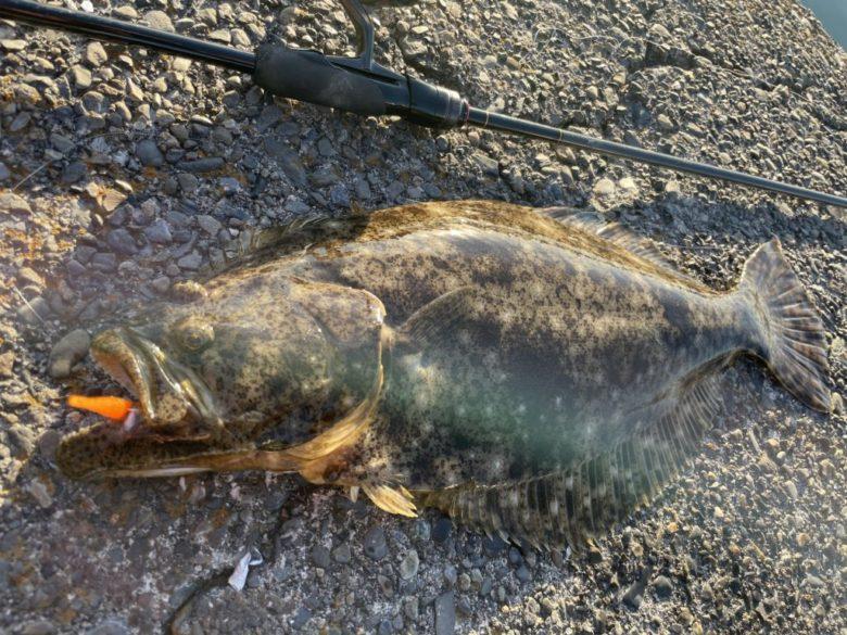 ヒラメ ワインド 釣果