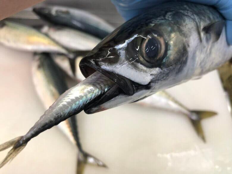魚 餌 脂
