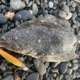 2月の静岡サーフヒラメ釣行 魚影薄い状態続く