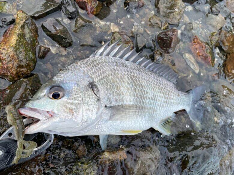 浜名湖 マイマイ 釣れる魚