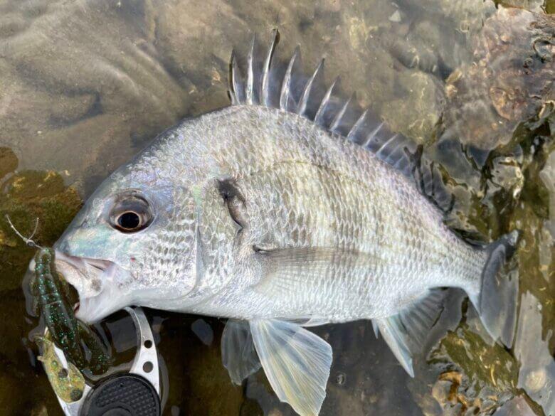 ホテルグリーンプラザ浜名湖 釣り 釣れる魚
