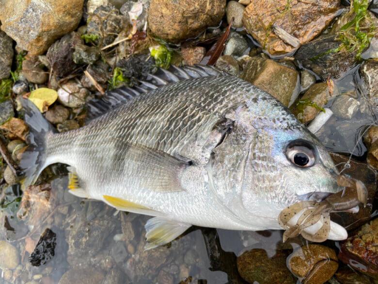 クレイジーフラッパー 釣れる魚