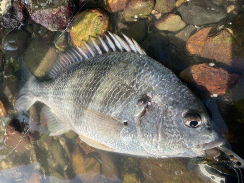 奥浜名湖 チニング 釣果