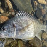 猪鼻湖ウェーディングチニング 午前の短時間釣行!
