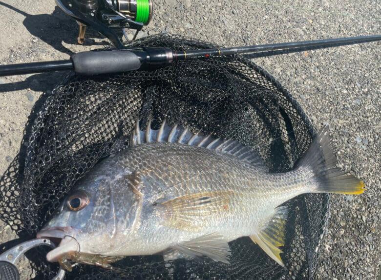 猪鼻湖 宇志 釣れる魚