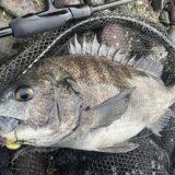 浜名湖チニング釣行 水温低下に苦戦の展開