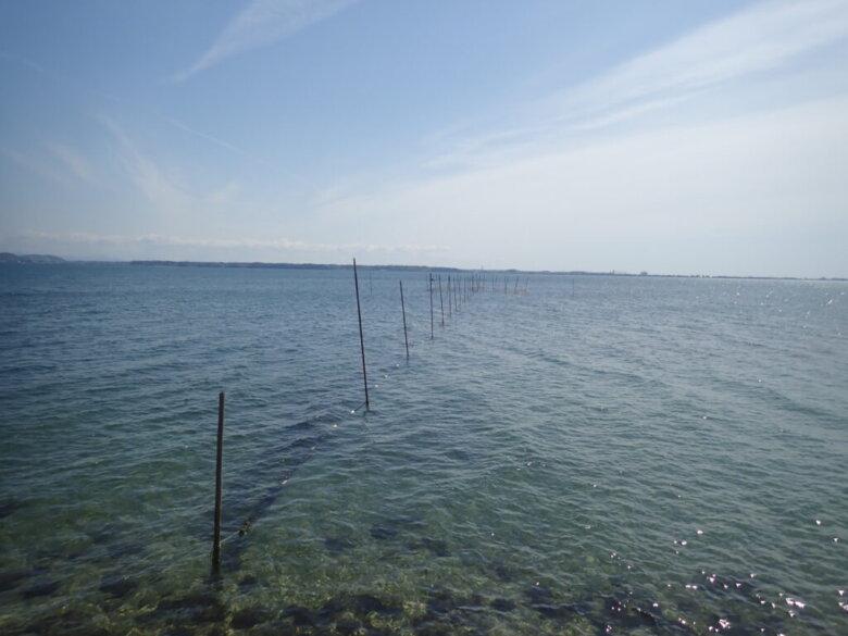 新所 釣り場