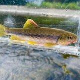 川釣りに使う竿の種類・初心者におすすめな選び方を徹底解説!