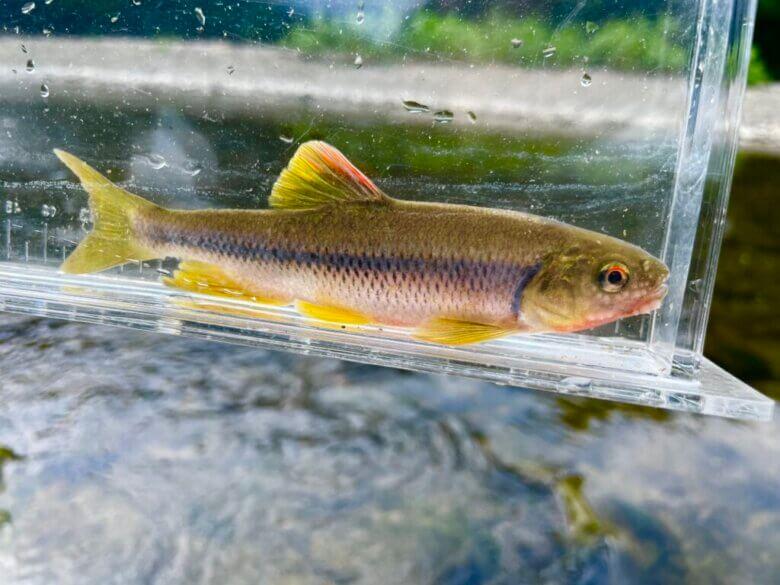 川釣り 初心者 竿 選び方 種類