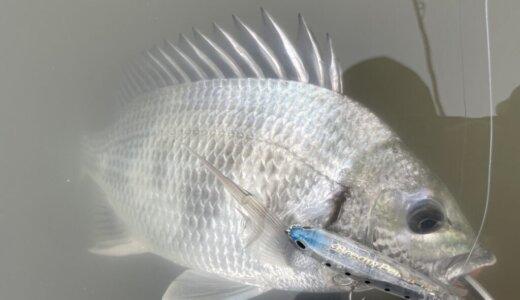 ブリームペンシル チヌ 釣果