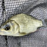 9月の静岡川釣り釣行 小鮒狙いの五目釣りを楽しむ